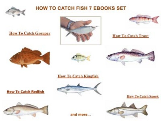 Product picture 7 How To Catch Fish Ebooks